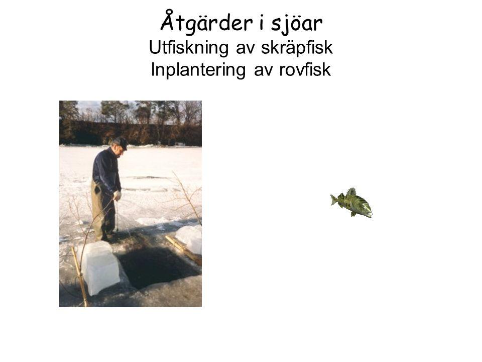 Åtgärder i sjöar Utfiskning av skräpfisk Inplantering av rovfisk