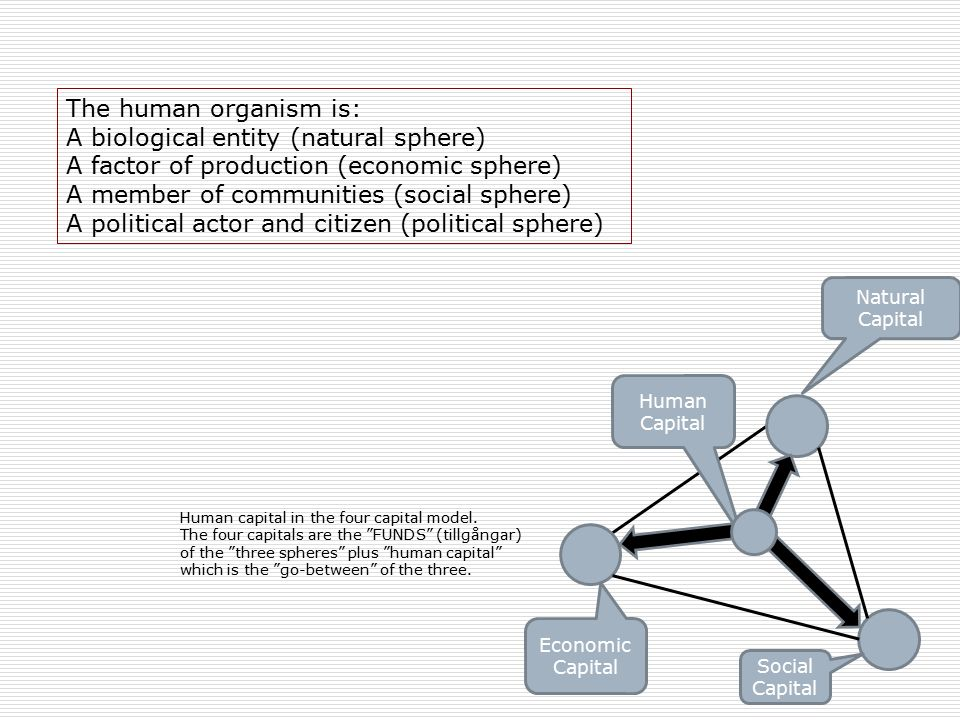 Human Capital Economic Capital Social Capital Natural Capital Human capital in the four capital model.
