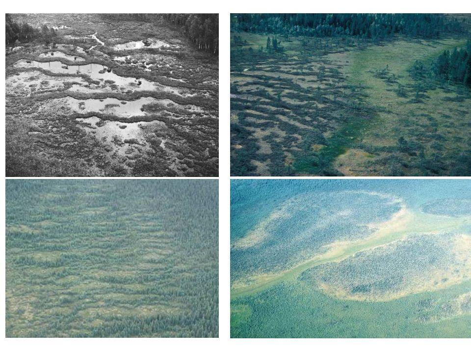 Torvkulle i permafrostzon Ombrotrofisk vegetation (eller nästan) Huvudkomponenten är islinser  ger en vattenfylld sänka när den smälter Myr- struktur 3: Pals