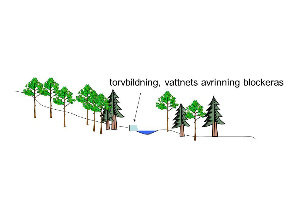 torvbildning, vattnets avrinning blockeras