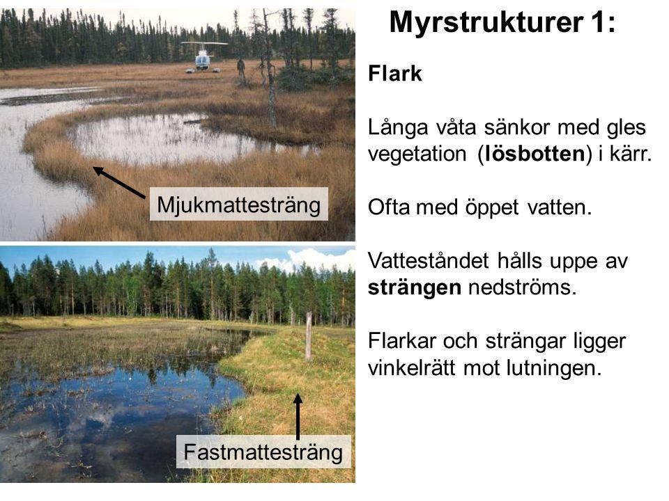 Flark Långa våta sänkor med gles vegetation (lösbotten) i kärr. Ofta med öppet vatten. Vatteståndet hålls uppe av strängen nedströms. Flarkar och strä