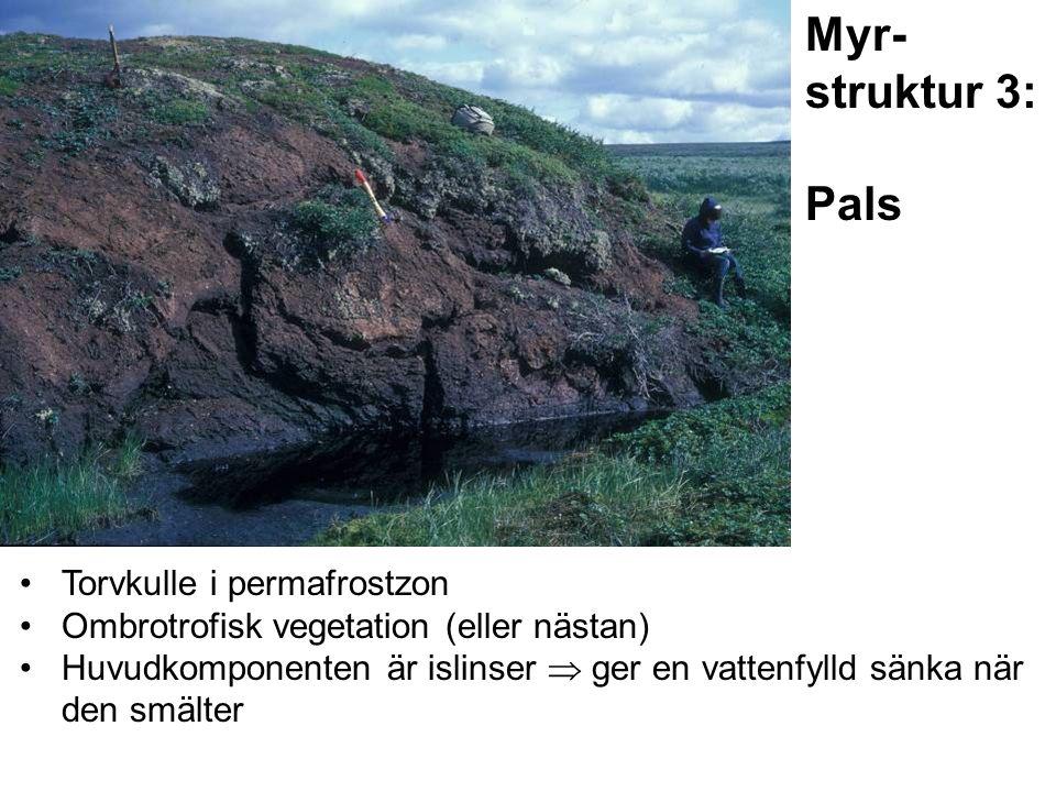 Torvkulle i permafrostzon Ombrotrofisk vegetation (eller nästan) Huvudkomponenten är islinser  ger en vattenfylld sänka när den smälter Myr- struktur