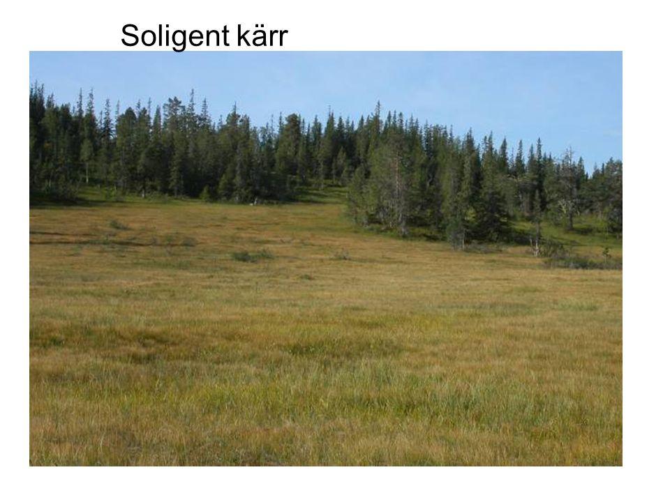 syrebrist, träd dör Peatland formation by expansion over mineral soil