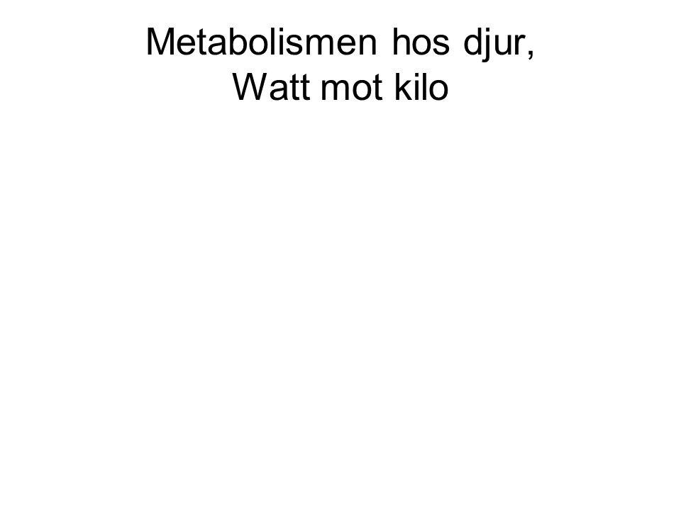 Metabolismen hos djur, Watt mot kilo