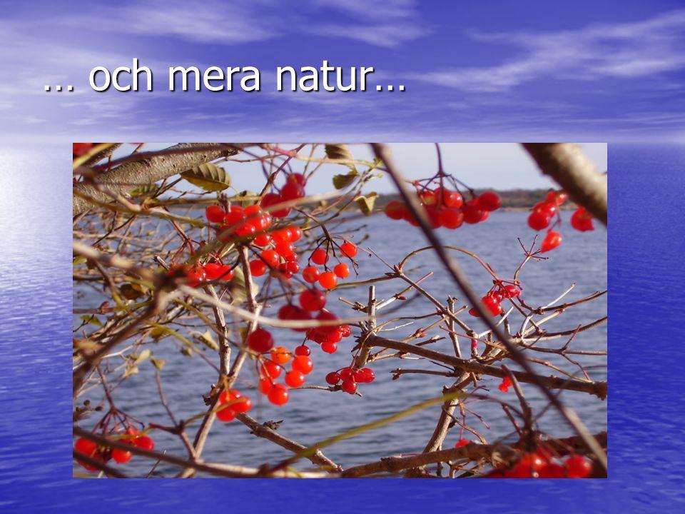 … och mera natur…