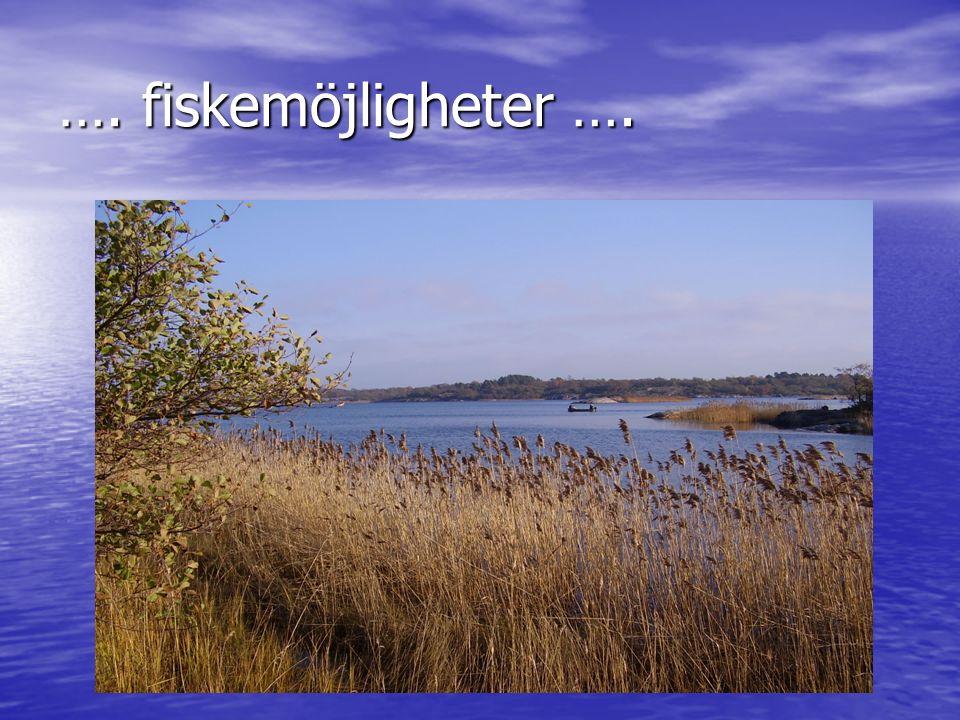 …. fiskemöjligheter ….
