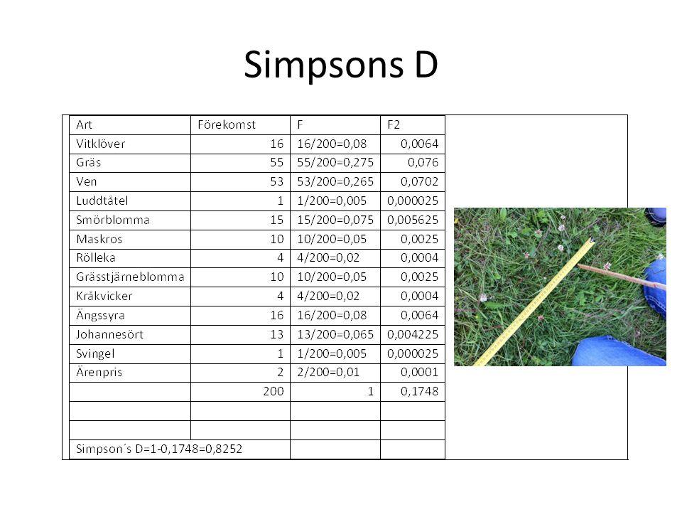 Simpsons D