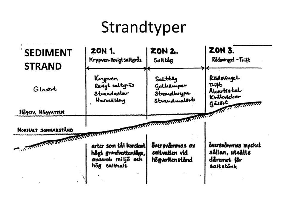 Strandtyper SEDIMENT STRAND