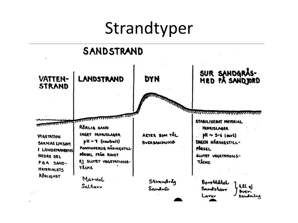 Strandtyper