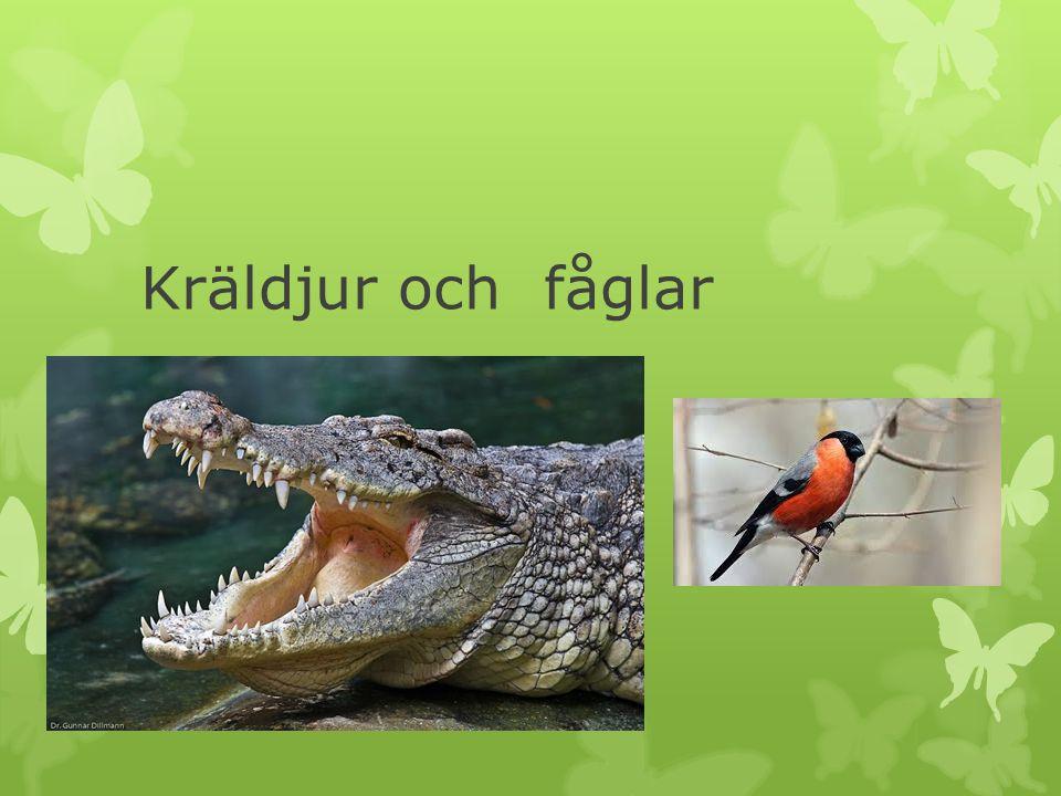 Kräldjur och fåglar