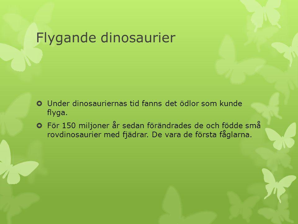 Flygande dinosaurier  Under dinosauriernas tid fanns det ödlor som kunde flyga.  För 150 miljoner år sedan förändrades de och födde små rovdinosauri