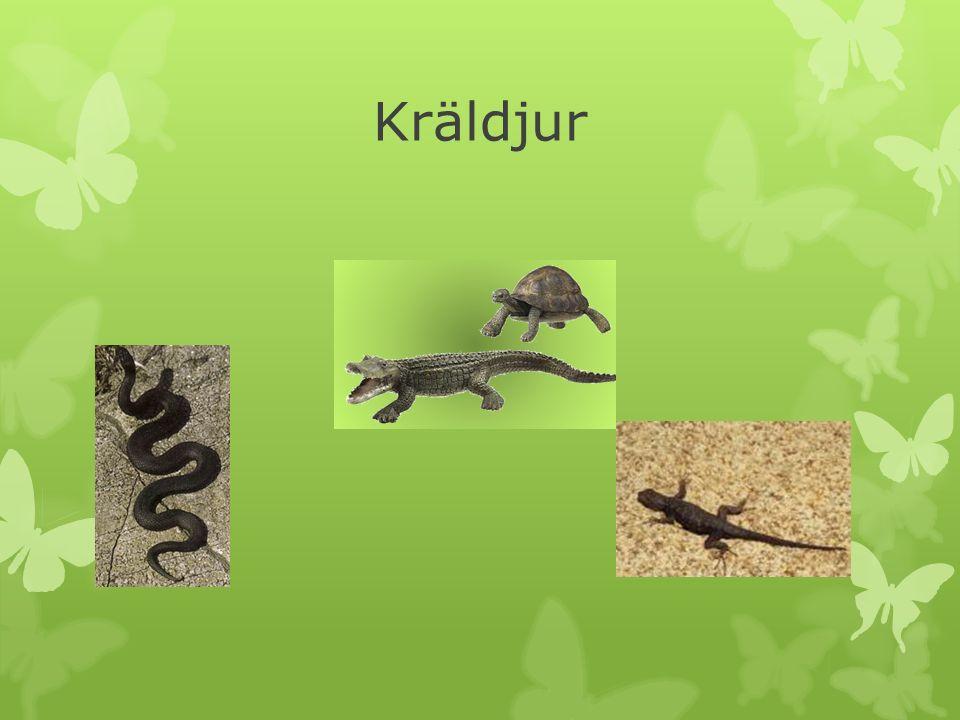  Kallas också reptiler. Sköldpaddor, krokodiler, ormar och ödlor tillhör kräldjuren.