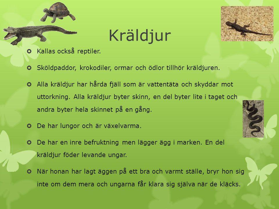  Kallas också reptiler.  Sköldpaddor, krokodiler, ormar och ödlor tillhör kräldjuren.  Alla kräldjur har hårda fjäll som är vattentäta och skyddar