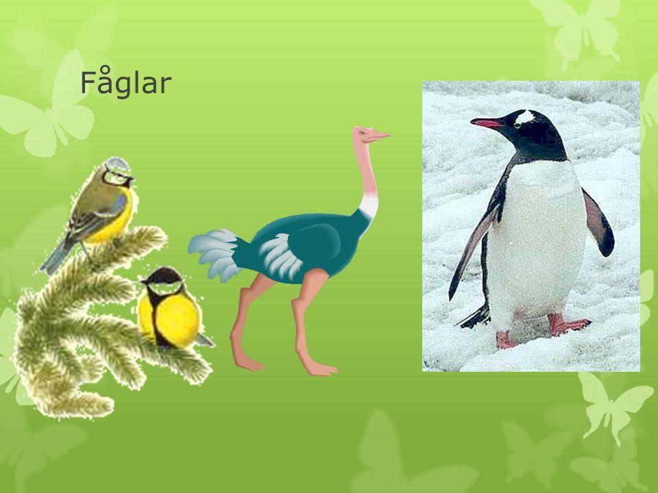  Fåglarna är världens snabbaste djur.
