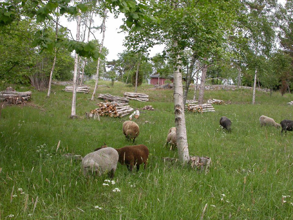 Försäljning Kött och förädlade köttprodukter Ull och förädlade ullprodukter Skinn Upplevelser – besöksgård Avelsdjur Mjölk och ost