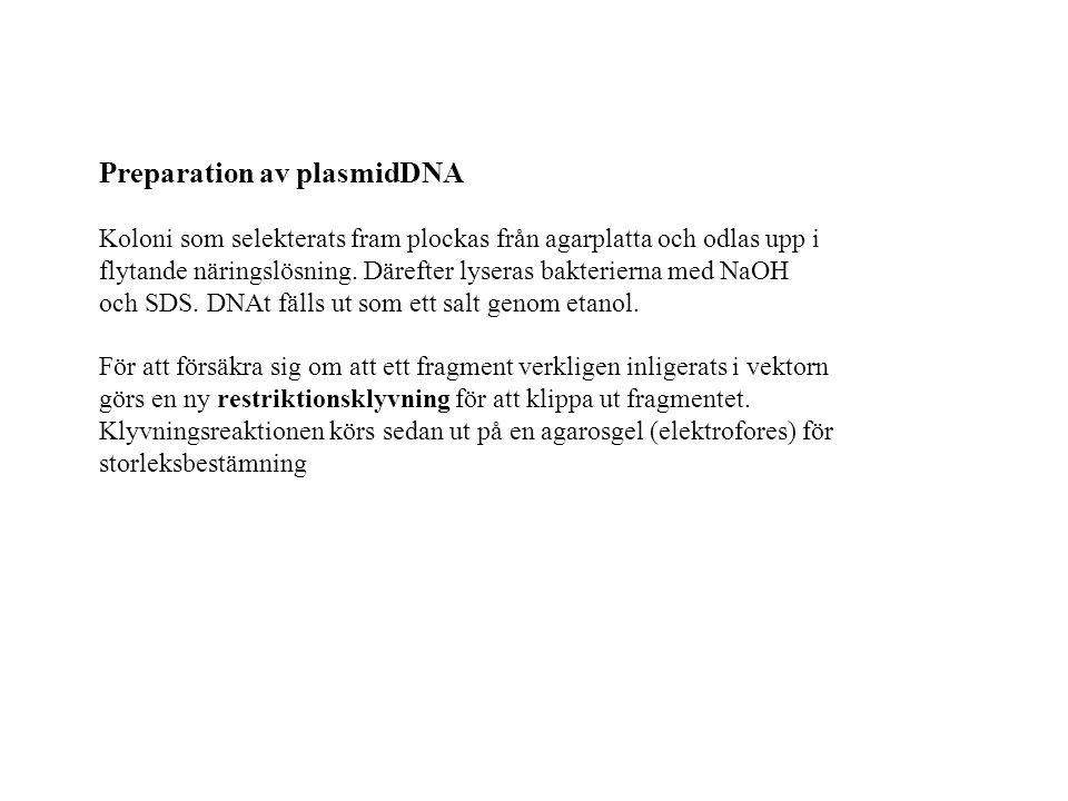 Preparation av plasmidDNA Koloni som selekterats fram plockas från agarplatta och odlas upp i flytande näringslösning.