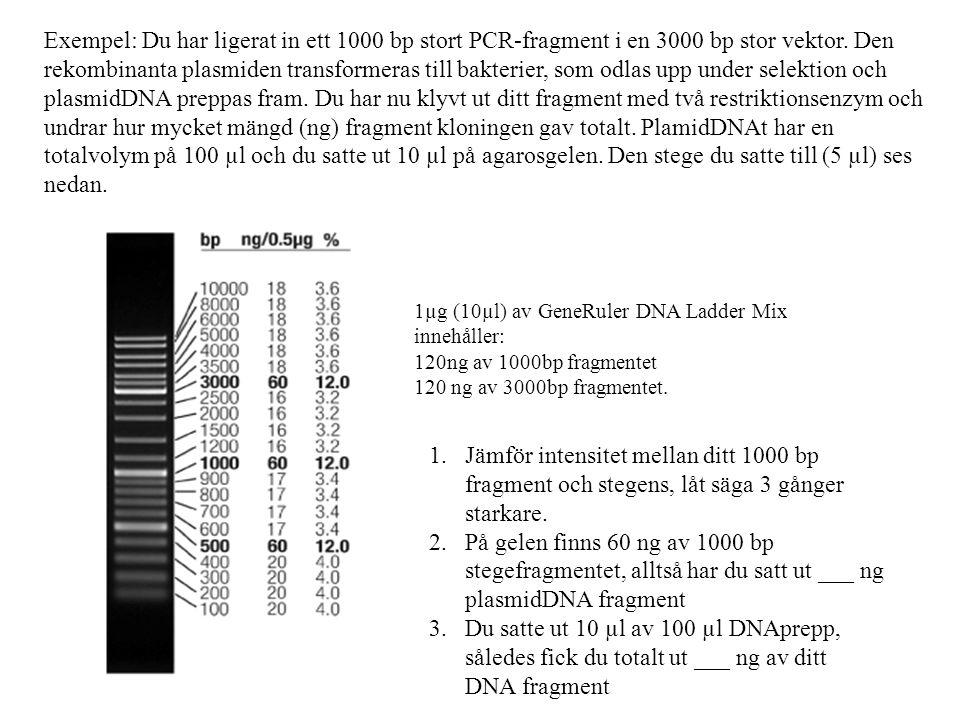 Exempel: Du har ligerat in ett 1000 bp stort PCR-fragment i en 3000 bp stor vektor.