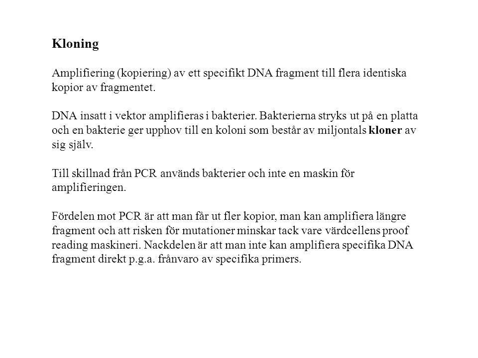 Kloning Amplifiering (kopiering) av ett specifikt DNA fragment till flera identiska kopior av fragmentet.