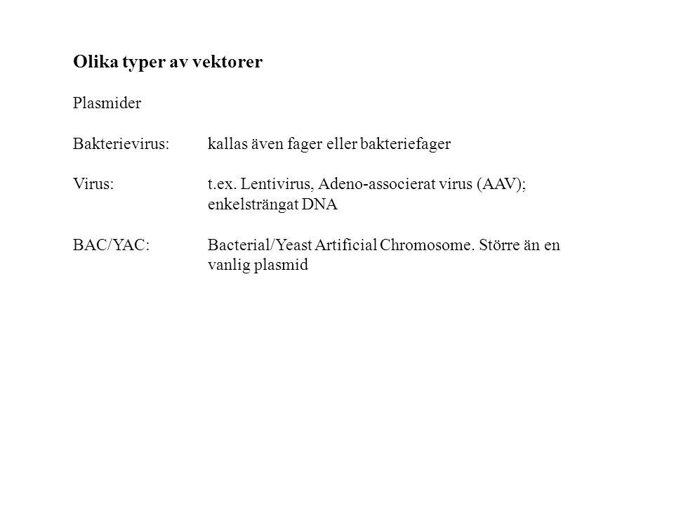 Olika typer av vektorer Plasmider Bakterievirus: kallas även fager eller bakteriefager Virus:t.ex.