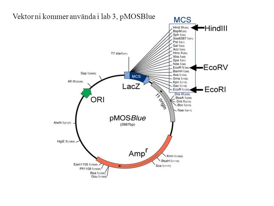 Agarosgel-elektrofores Elektrofores: Inmärkt (t.ex.