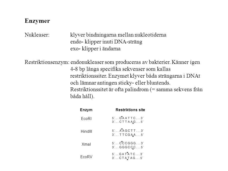 Kloningsverktyg och kloning Dagens föreläsning: Definition kloning (repetition) Grundläggande begrepp (repetition) Kloningsverktyg vektorer enzymer Ett kloningsexperiment från start till mål Kapitel 5 Lodish, Molecular Cell Biology 7th ed, 2013.