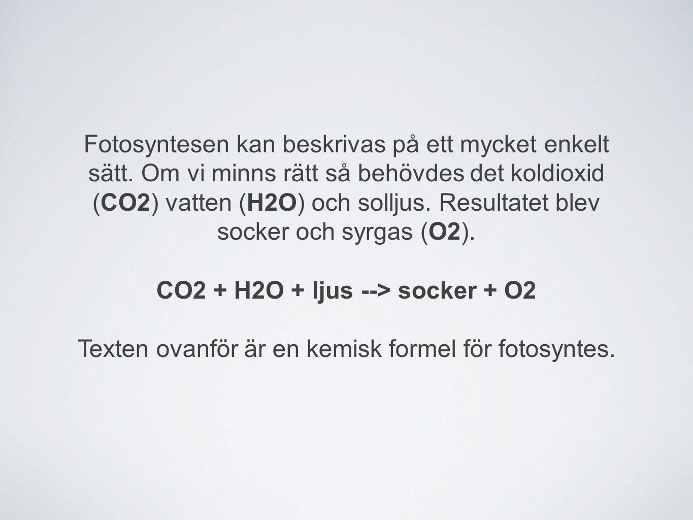 Fotosyntesen kan beskrivas på ett mycket enkelt sätt. Om vi minns rätt så behövdes det koldioxid (CO2) vatten (H2O) och solljus. Resultatet blev socke