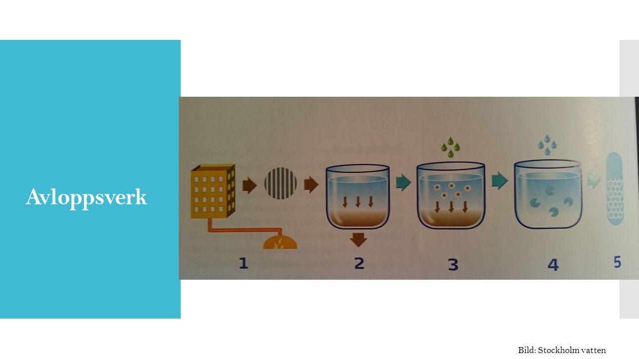 Hur fungerar ett reningsverk .Förklara de olika stegen Hur fungerar ett vattenverk .