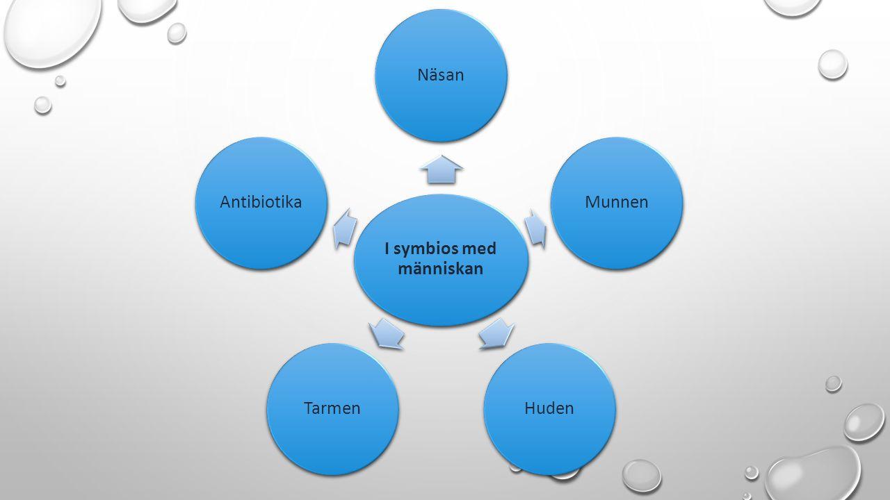 I symbios med människan NäsanMunnenHudenTarmenAntibiotika
