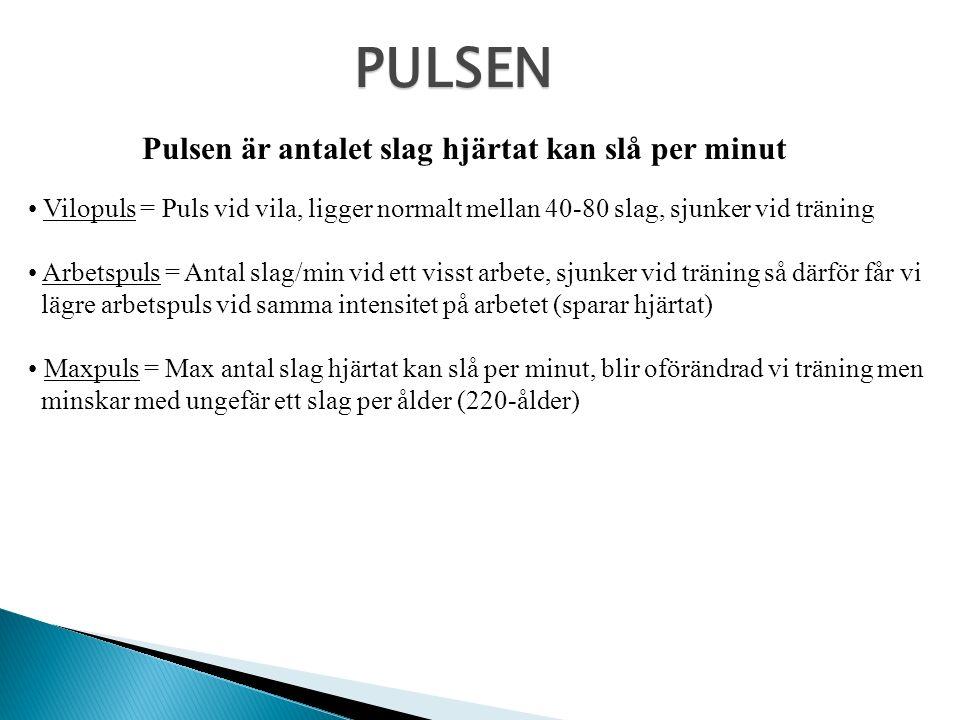 PULSEN Pulsen är antalet slag hjärtat kan slå per minut Vilopuls = Puls vid vila, ligger normalt mellan 40-80 slag, sjunker vid träning Arbetspuls = A
