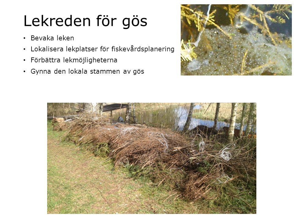 Lekreden för gös Bevaka leken Lokalisera lekplatser för fiskevårdsplanering Förbättra lekmöjligheterna Gynna den lokala stammen av gös