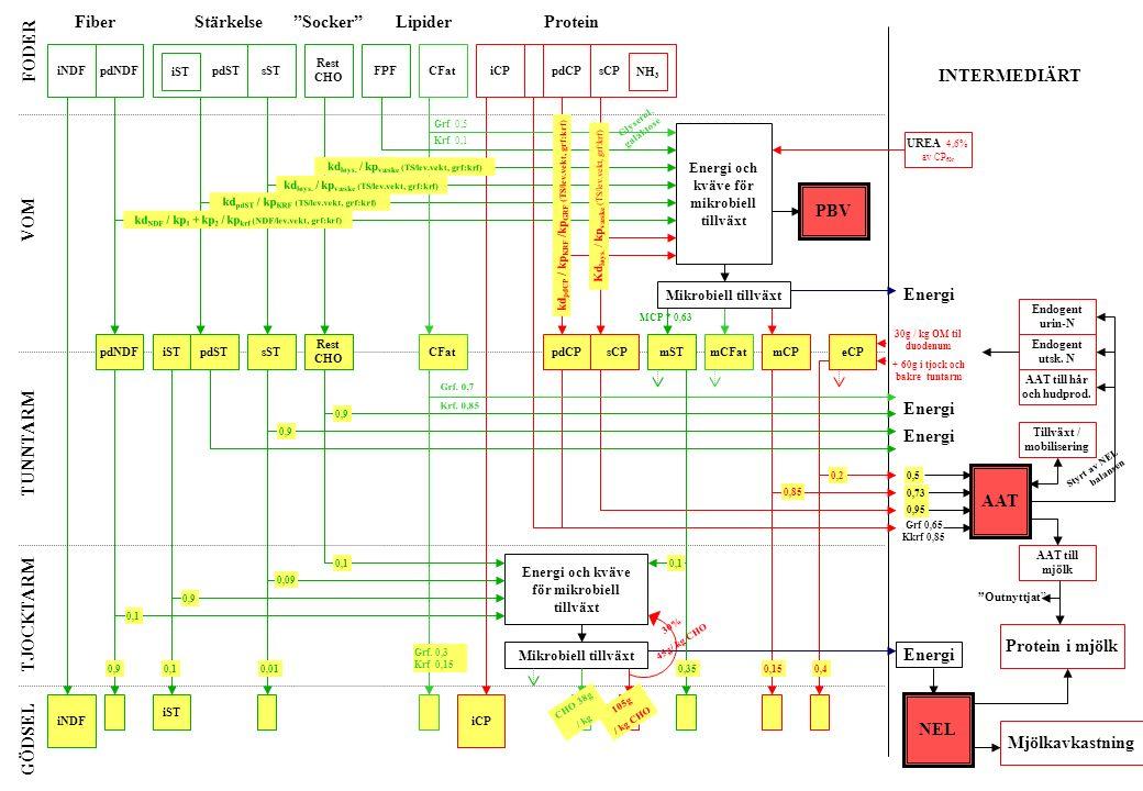 iNDFpdNDF iST pdSTsST Rest CHO iCPpdCPsCPCFatFPF FiberStärkelse Socker ProteinLipider NH 3 Energi och kväve för mikrobiell tillväxt iNDF pdNDFpdSTsST Rest CHO iCP pdCPsCPCFat iST mSTmCPmCFateCP AAT Energi PBV Endogent utsk.