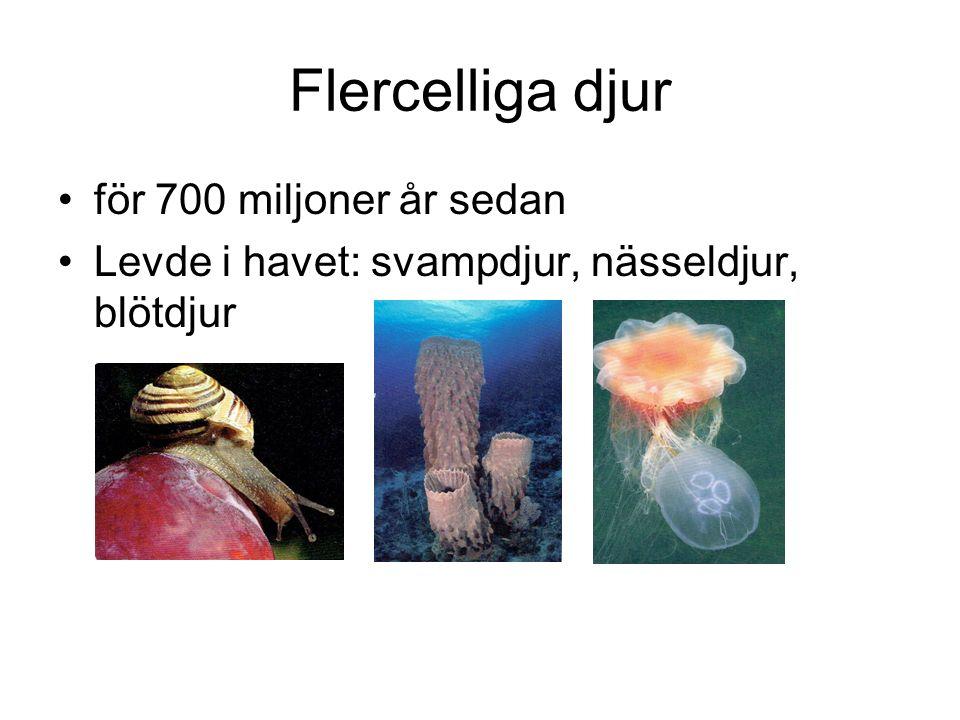 Flercelliga djur för 700 miljoner år sedan Levde i havet: svampdjur, nässeldjur, blötdjur