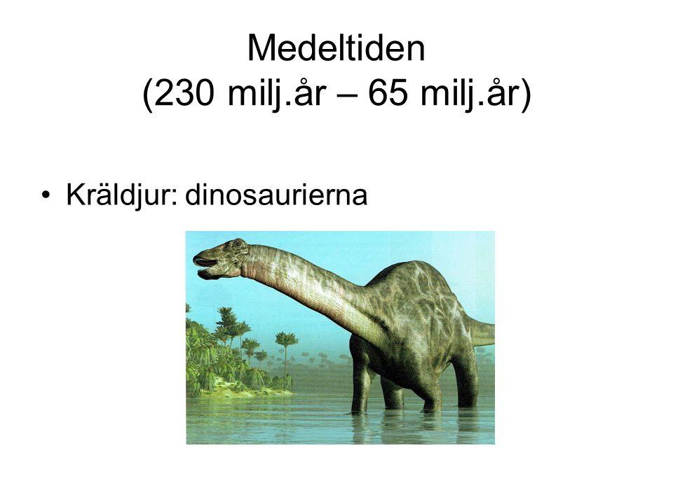 Medeltiden (230 milj.år – 65 milj.år) Kräldjur: dinosaurierna