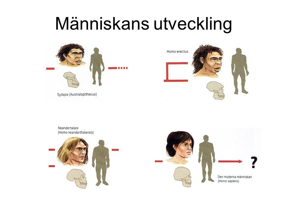 Människans utveckling