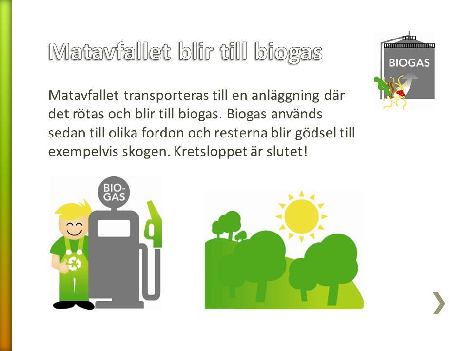 Matavfallet transporteras till en anläggning där det rötas och blir till biogas. Biogas används sedan till olika fordon och resterna blir gödsel till