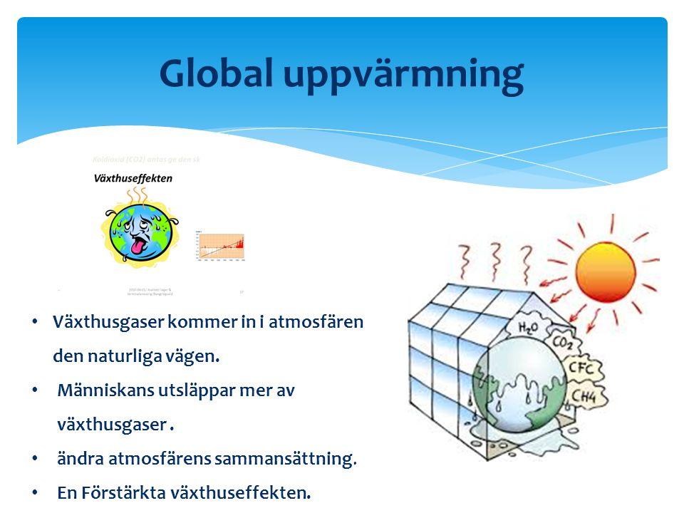 Global uppvärmning Utsläppan mer CO2 Förbränna fossila Änvanda bränslen i 1.Industri 2.Värma upp böstader 3.Som drivmedel till bill och flygplan Industriella revolutionen och ökning på världhandel.