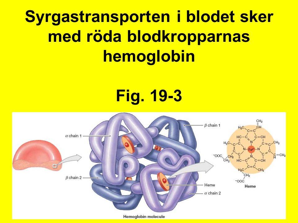 Syrgastransporten i blodet sker med röda blodkropparnas hemoglobin Fig. 19-3