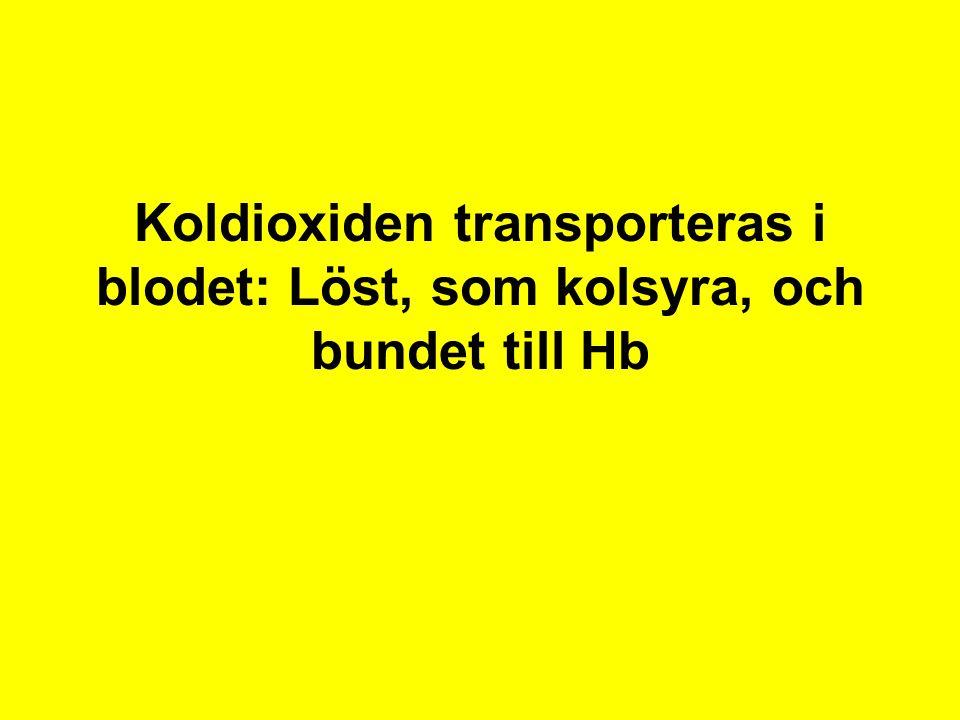 Koldioxiden transporteras i blodet: Löst, som kolsyra, och bundet till Hb