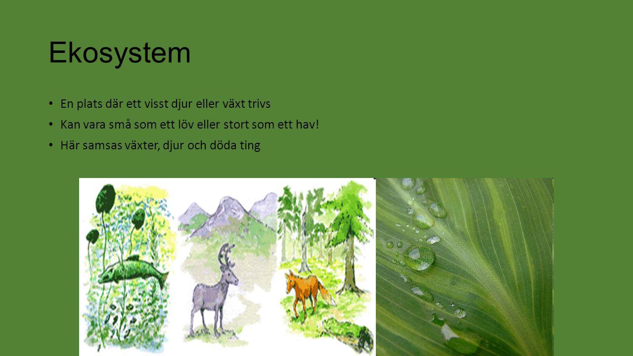 Ekosystem En plats där ett visst djur eller växt trivs Kan vara små som ett löv eller stort som ett hav.