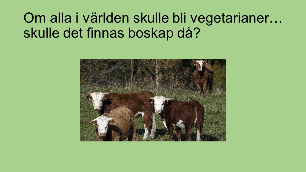 Om alla i världen skulle bli vegetarianer… skulle det finnas boskap då