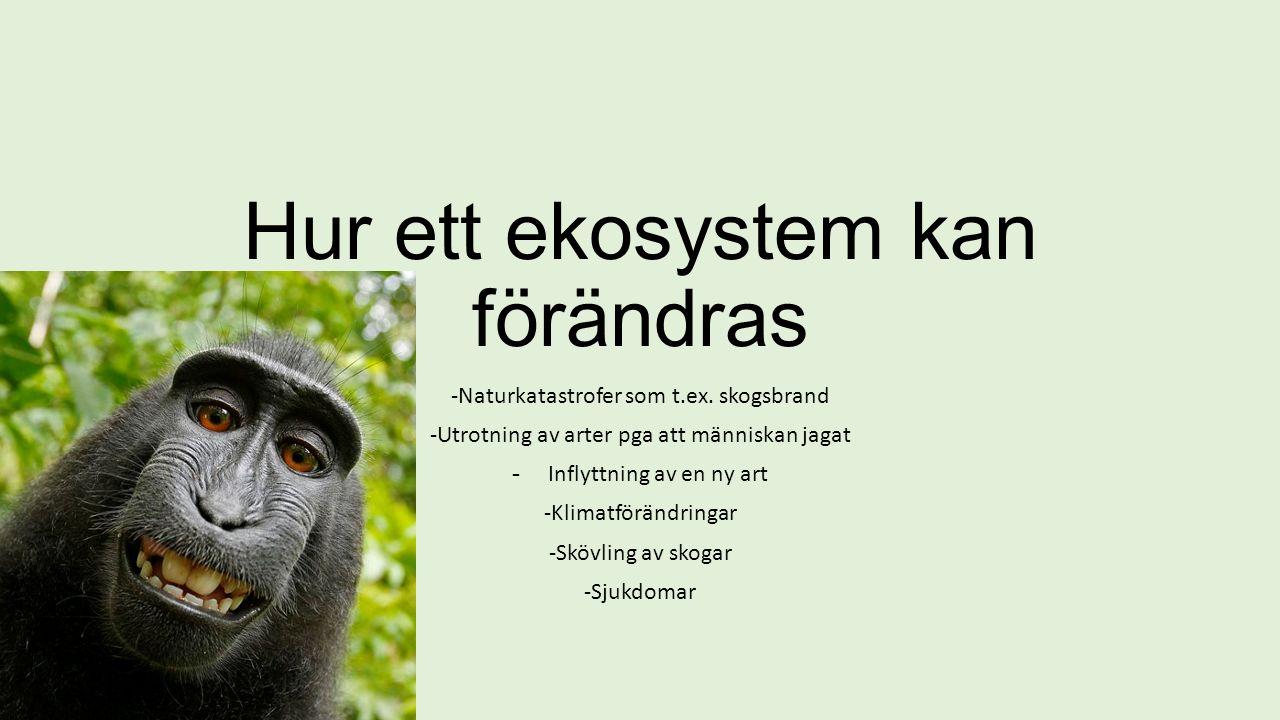 Hur ett ekosystem kan förändras -Naturkatastrofer som t.ex.