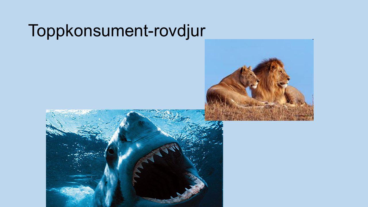 Toppkonsument-rovdjur