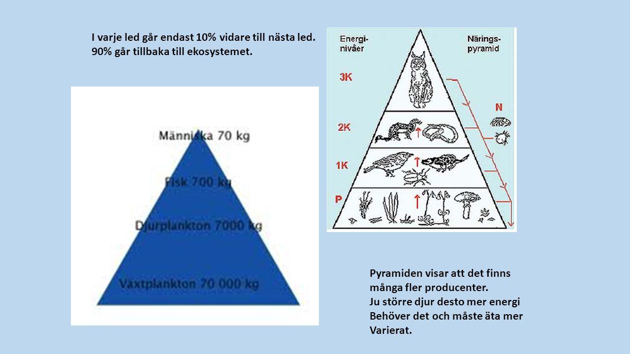 I varje led går endast 10% vidare till nästa led. 90% går tillbaka till ekosystemet.