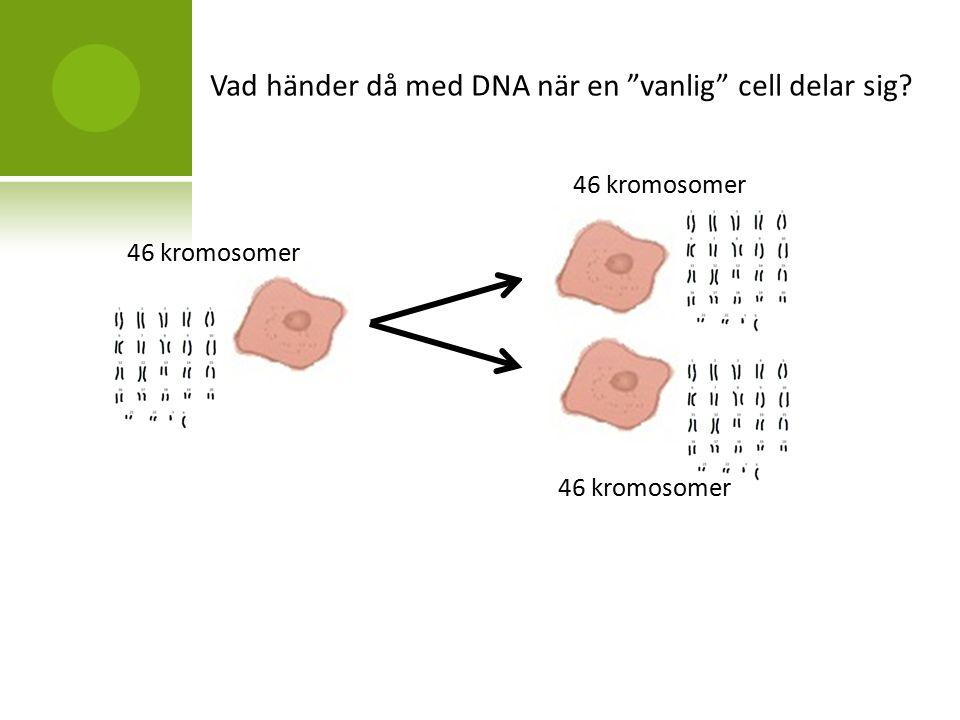 kromosomer og dna