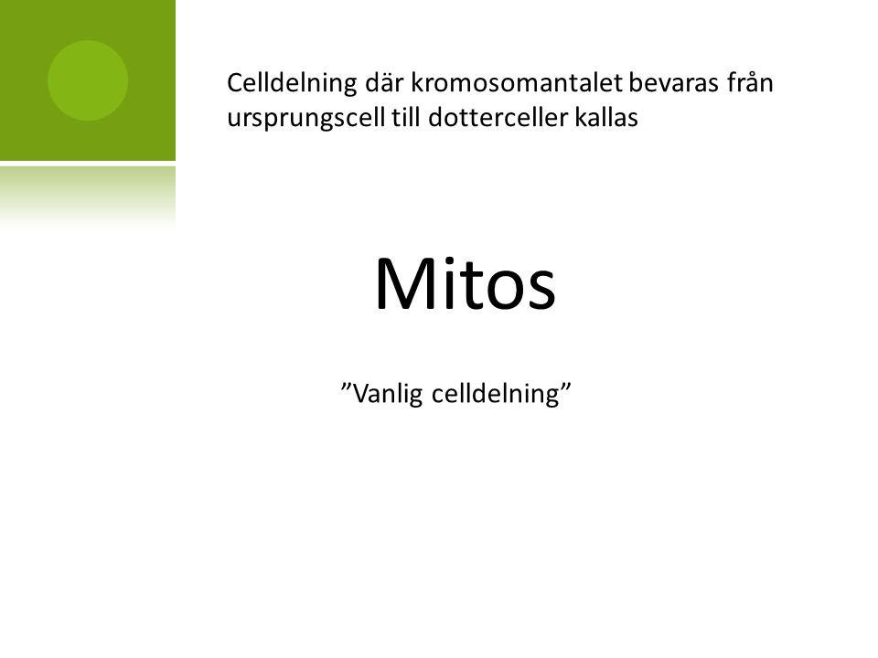 Celldelning där kromosomantalet bevaras från ursprungscell till dotterceller kallas Mitos Vanlig celldelning