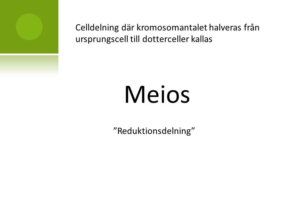 Celldelning där kromosomantalet halveras från ursprungscell till dotterceller kallas Meios Reduktionsdelning