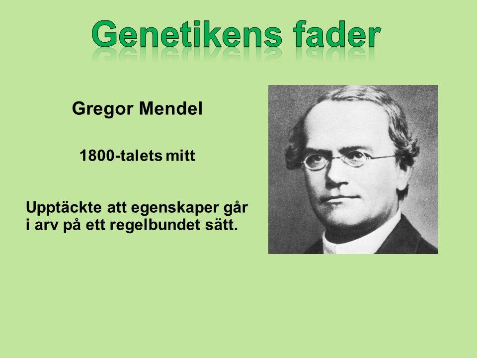 Gregor Mendel 1800-talets mitt Upptäckte att egenskaper går i arv på ett regelbundet sätt.