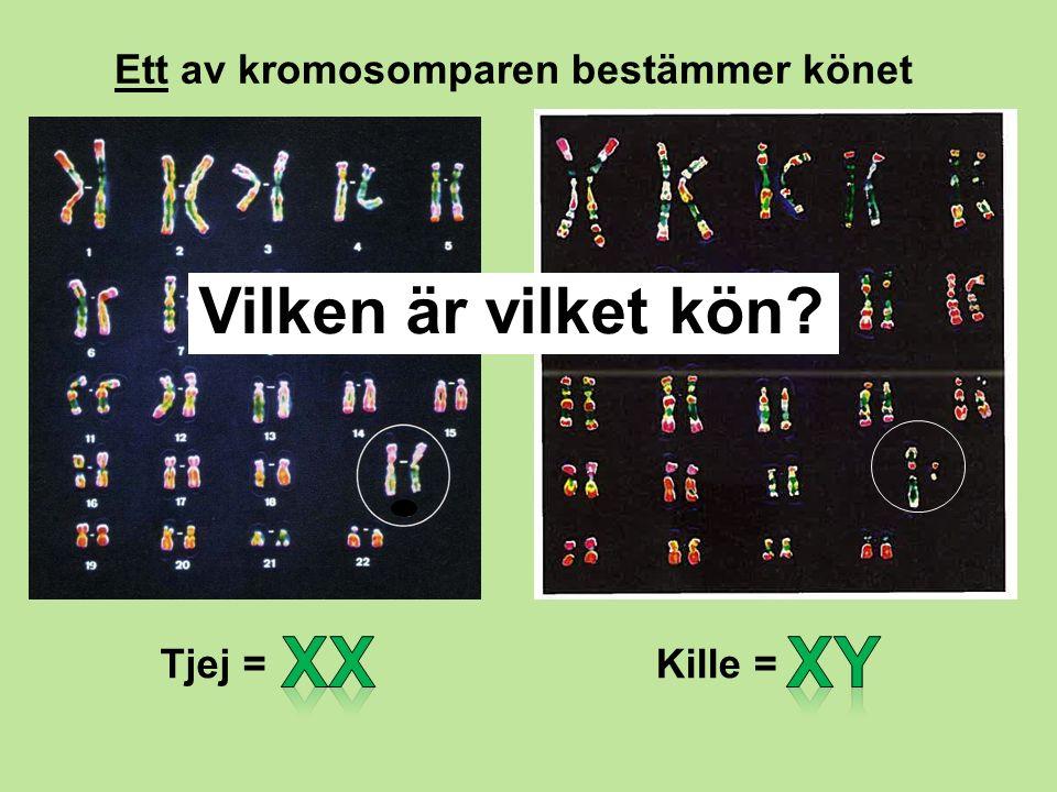 Ett av kromosomparen bestämmer könet Tjej =Kille = Vilken är vilket kön