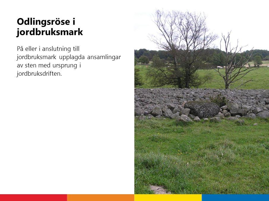 Odlingsröse i jordbruksmark På eller i anslutning till jordbruksmark upplagda ansamlingar av sten med ursprung i jordbruksdriften.