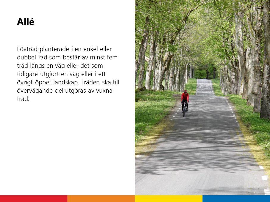 Allé Lövträd planterade i en enkel eller dubbel rad som består av minst fem träd längs en väg eller det som tidigare utgjort en väg eller i ett övrigt öppet landskap.